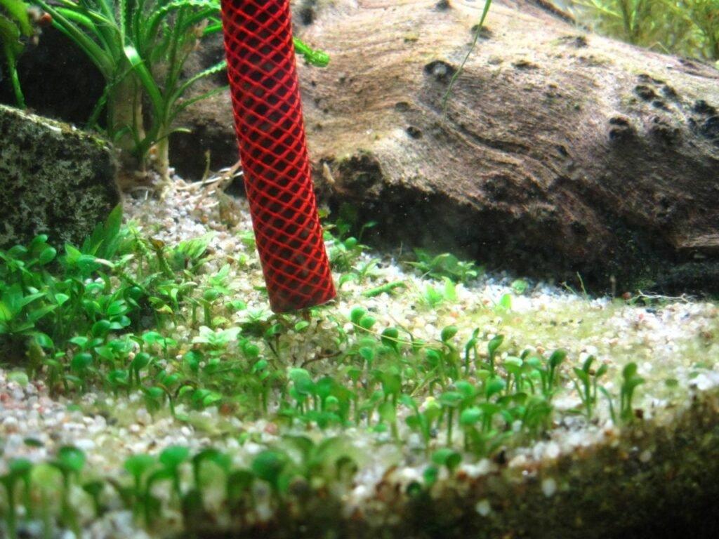 Entfernung des Bodengrundes mit einem Gartenschlauch