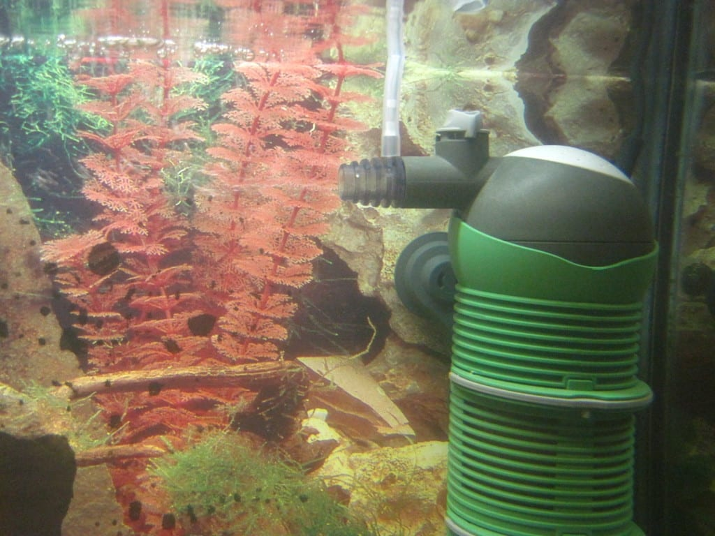 Zugabe von Umgebungsluft mit dem EHEIM aquaball 180