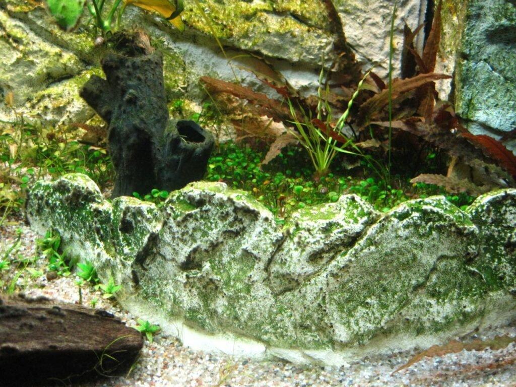 Terrassenelemente Fur Mehr Tiefe Aquarium Welt
