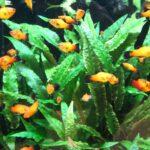 Aquarium für Kinder | So wird Aquaristik kindgerecht