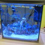 Tetra AquaArt 30 Aquarium im Test