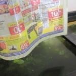 Die Kahmhaut haftet an der Zeitung und wird mit ihr von der Wasseroberfläche abgezogen.