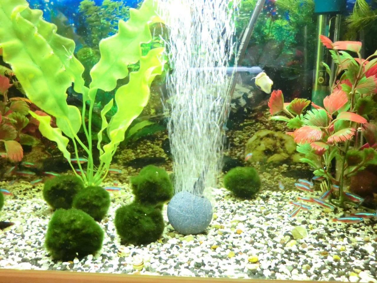 Durch einen Sprudelstein wird Raumluft und somit auch Sauerstoff ins Aquarium eingebracht. CO2 hingegen wird ausgewaschen.
