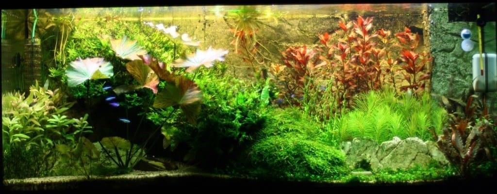 Ein Überblick über mein Juwel Rio 240 mit tropischer Bepflanzung.