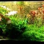 5 Tipps zum Aquarium einrichten