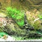Einrichtung eines Aquariums | Hardscape