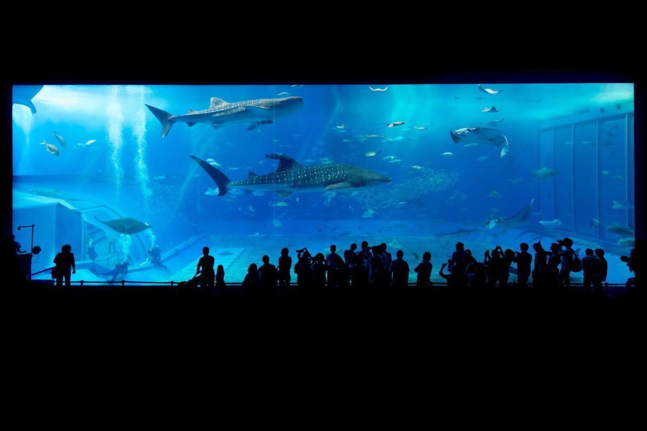 Einrichtung eines Aquariums | Welches Aquarium passt zu mir?