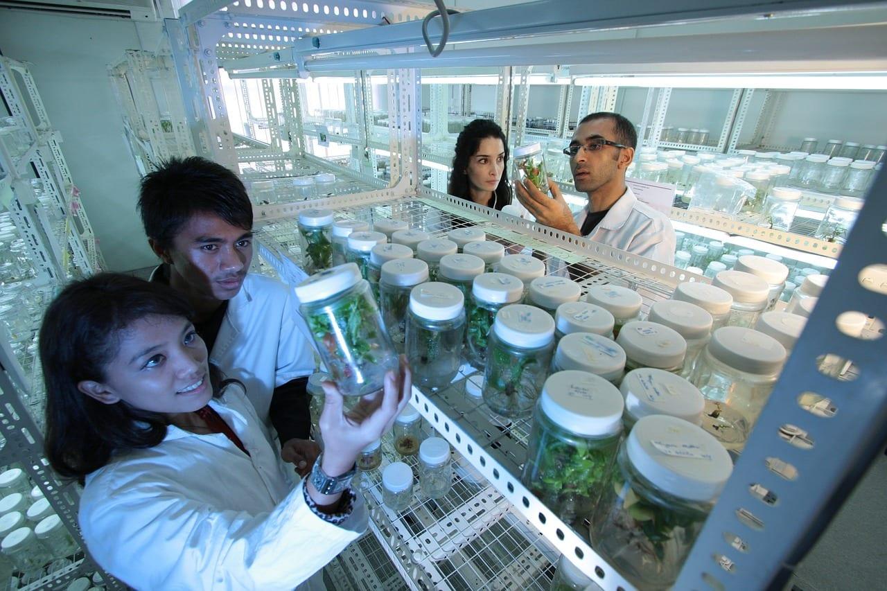 Pflanzen in der Forschung.