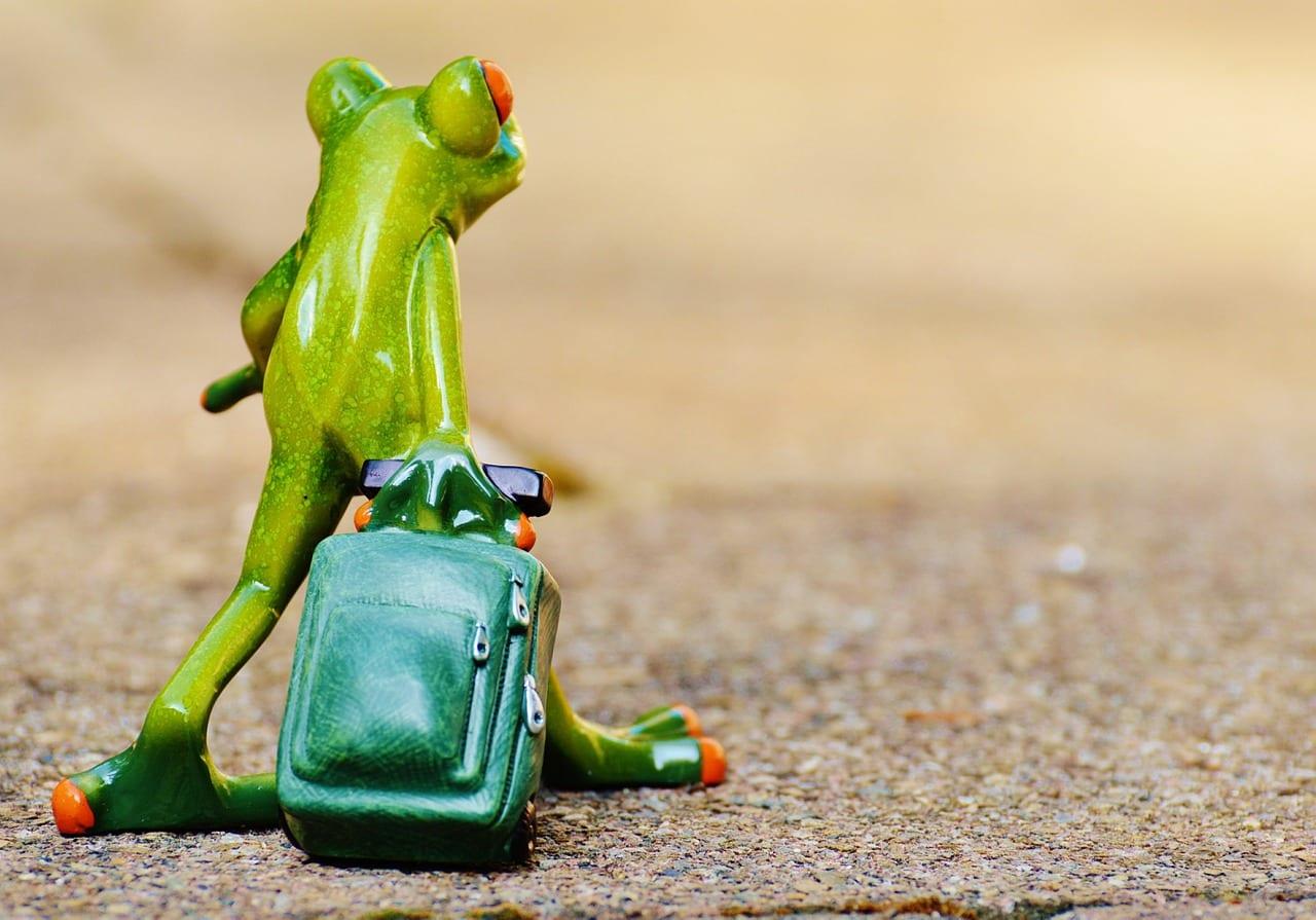 Der Frosch macht Urlaub.