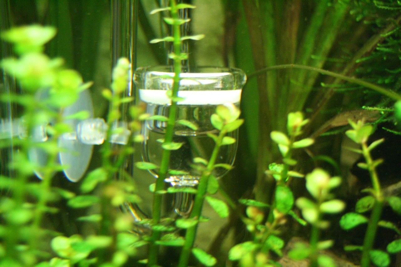 Der JBL ProFlora Taifun P2 in einem bepflanzten Aquarium.