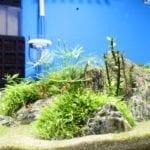 Ein Überblick über das Aquarium im Ausgangszustand vor dem Versuch.