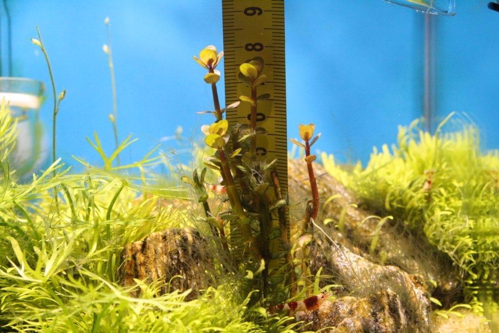 Nach zwei Wochen mit Carbo Elixier Bio sind die Pflanzen um zwei Zentimeter gewachsen.