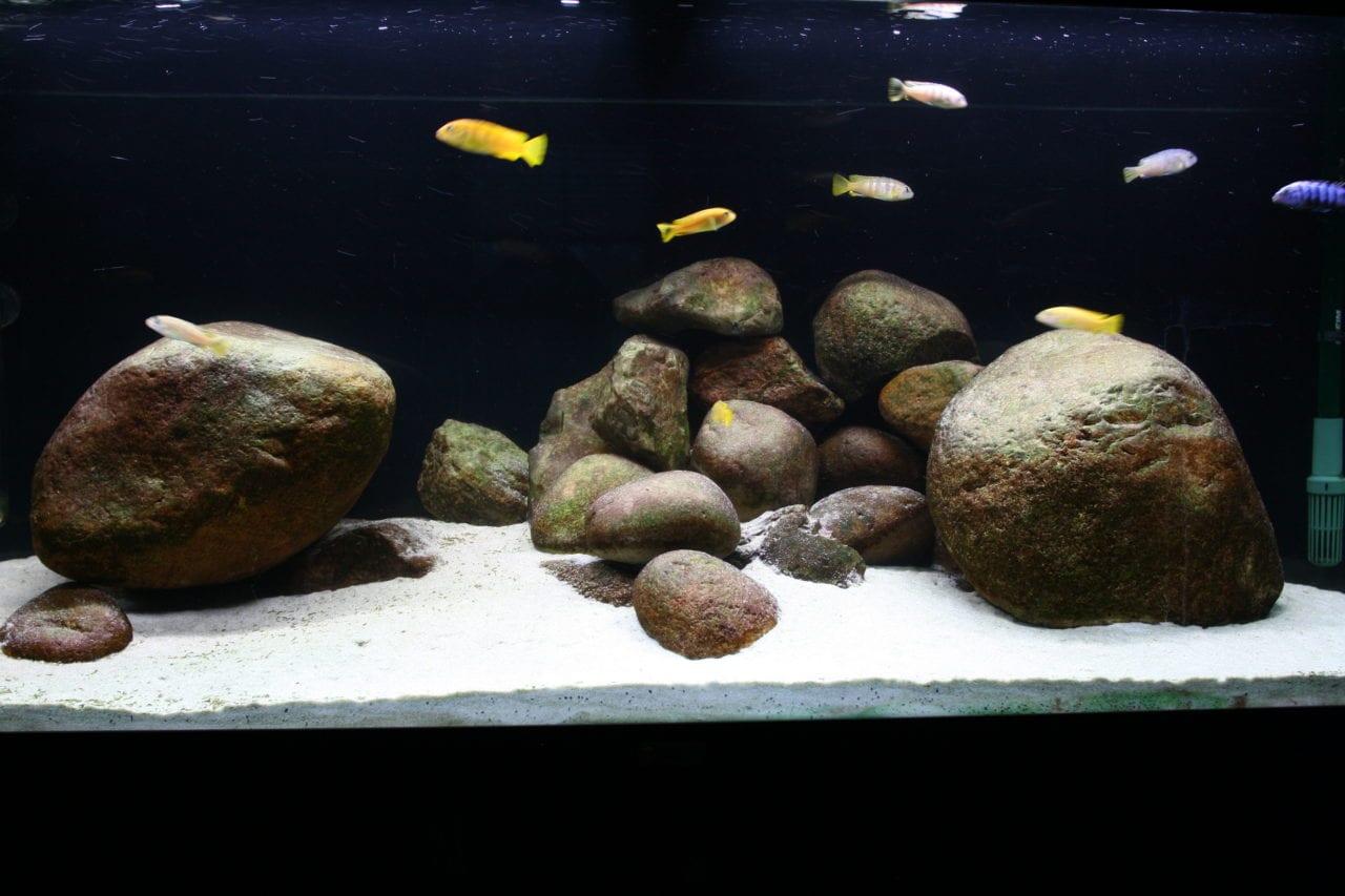 sera LED X-Change Tube daylight sunrise bei voller Leistung. Für ein Biotop-Aquarium ausreichend.
