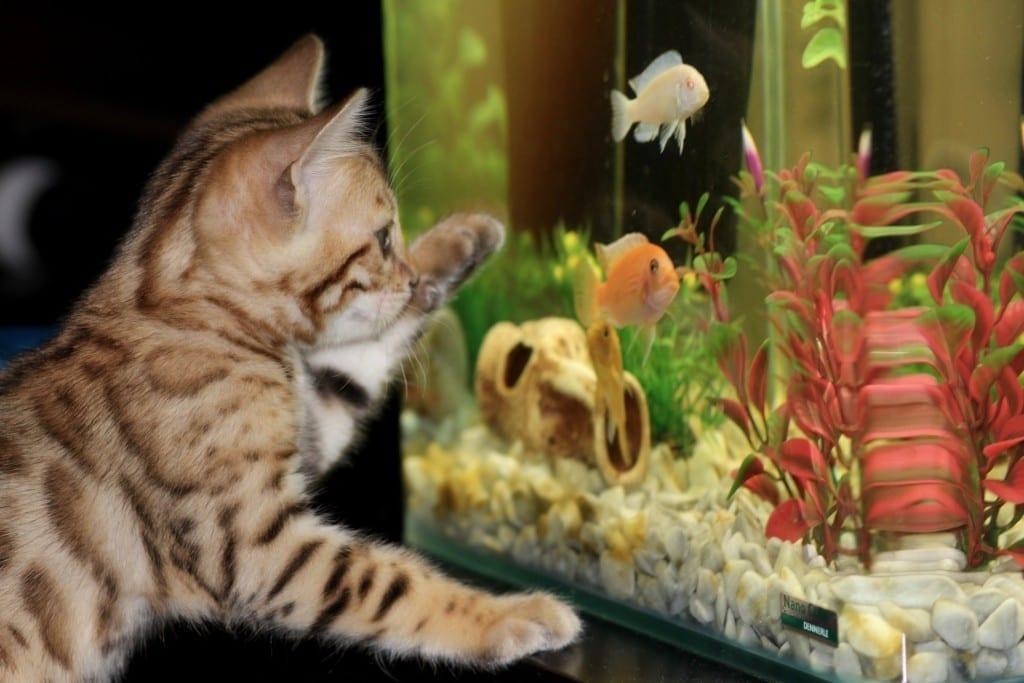 An einem schön eingerichteten Aquarium werden alle Familienmitglieder ihre Freude haben. Schon Babies sind von den bunten Bewegungen fasziniert.