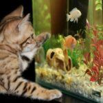 Aquarien Empfehlungen für Einsteiger und Profis