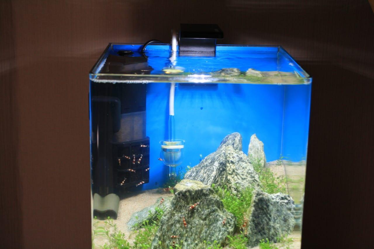 dennerle nano style led m ausprobiert aquarium welt. Black Bedroom Furniture Sets. Home Design Ideas