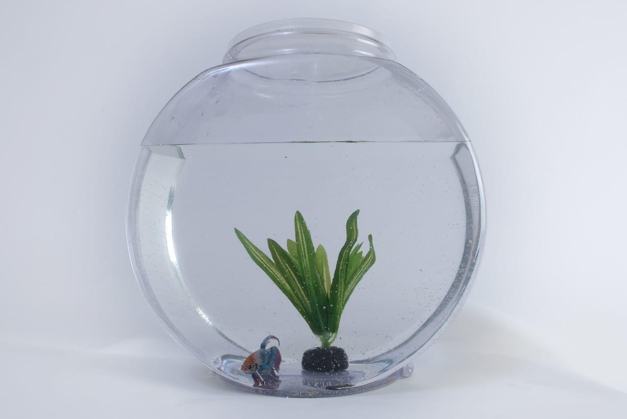 Ein einfaches Glas mit einer Pflanze und einem Fisch. Hier sieht man schon, dass der Fisch nicht überglücklich ist. Und der Aquarianer wird es wohl auch nicht.