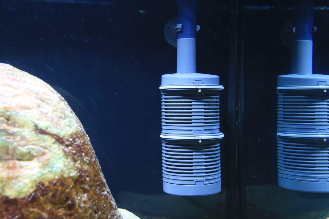 Der EHEIM Vorfilter an einem Installationsset 1. Die Befestigung erfolgt mit Saugnäpfen über das Ansaugrohr. Der Filter schwebt frei.