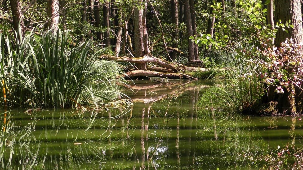 Biotop im südamerikanischem Regenwald
