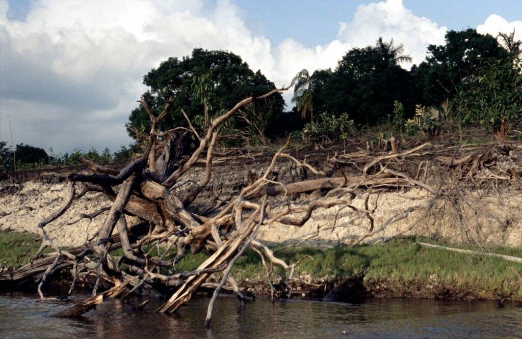 Uferzone mit Holz