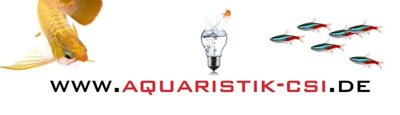 Zierfische online kaufen bei CSI Aquaristik