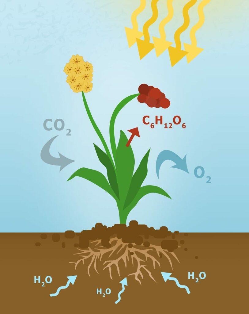 Schematische Darstellung der Fotosynthese