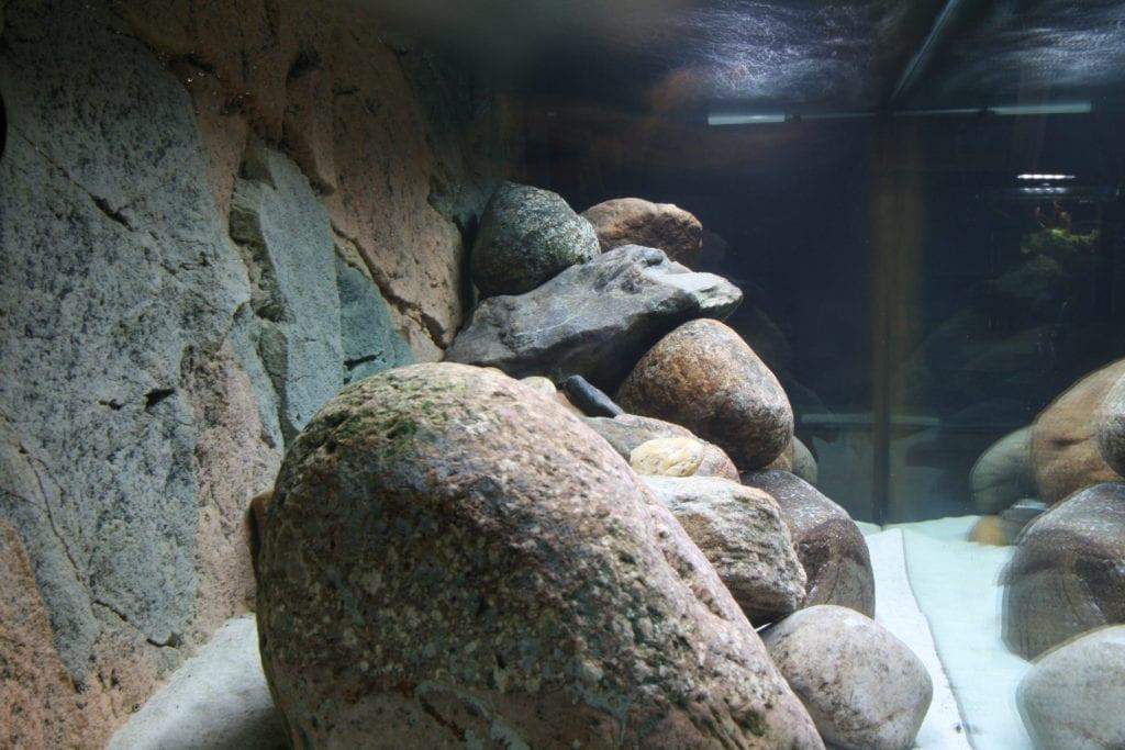 Blick von der Seite in ein Felsbiotop.