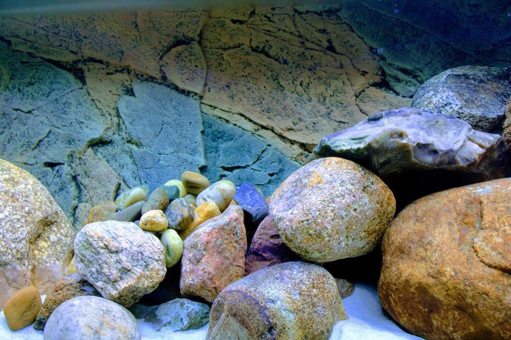 Slim Line Aquarium Rückwand mit Felsen im Vordergrund