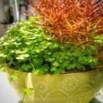 Kontrast zwischen roten und grünen Pflanzen