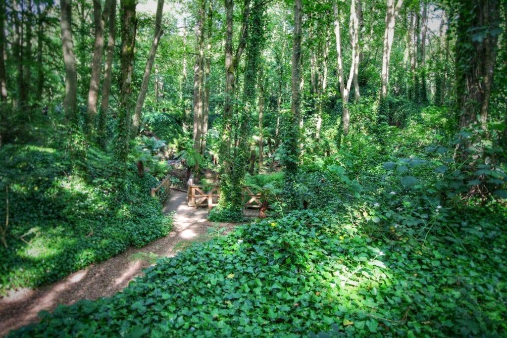 Eine Waldlandschaft in Irland