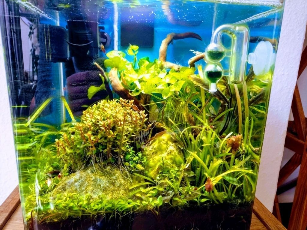 klassische Bepflanzung in einem Nano-Cube